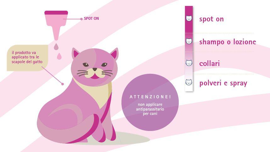Cura del Gatto: gli Antiparassitari