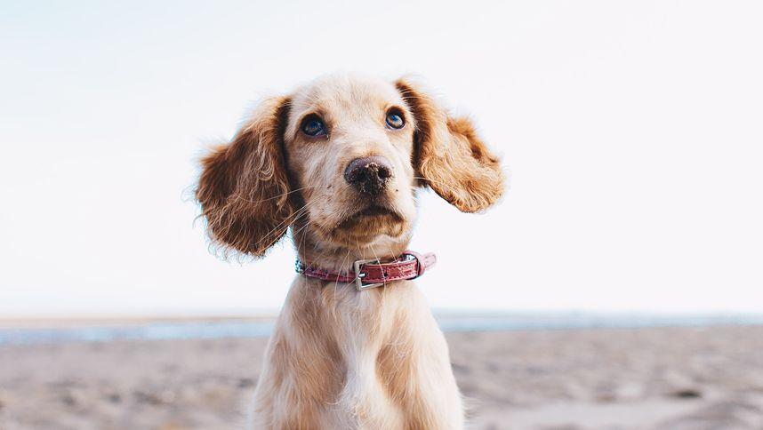 La salute del vostro Cane