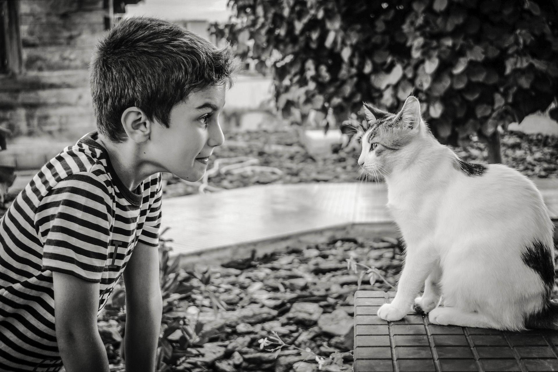 Il mio Gatto può essere educato?