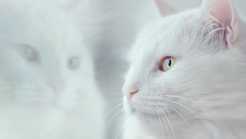 Tenere il Gatto in Casa