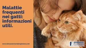 Malattie frequenti nei Gatti: Informazioni Utili