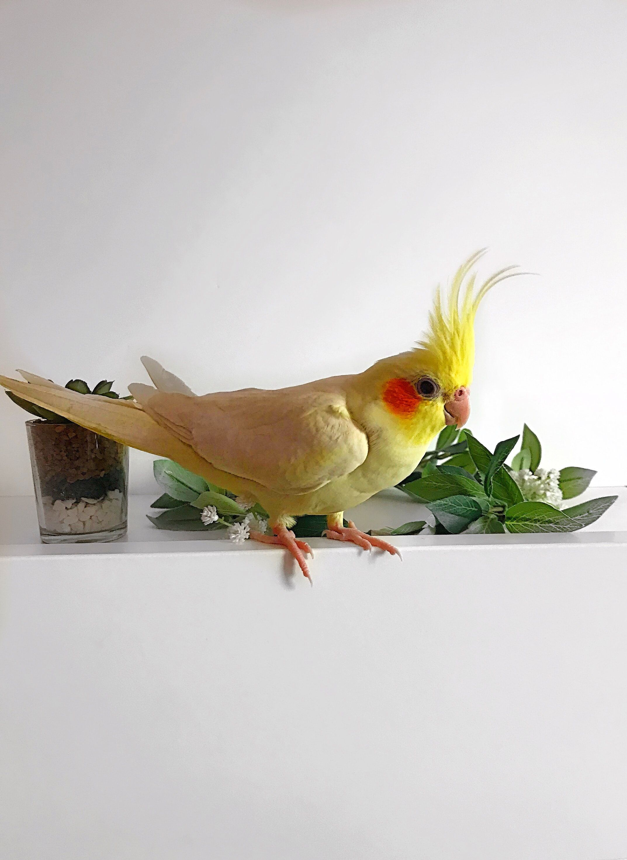 Il pappagallo: consigli